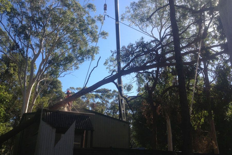 A Fallen Tree Damaged a Property