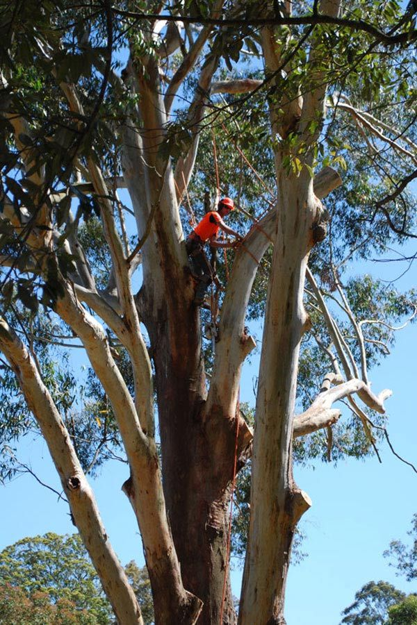 Inspections of Large Trees