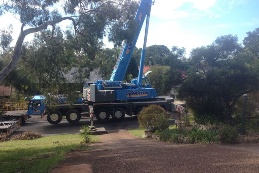 Big Crane Truck for Removal of Tree