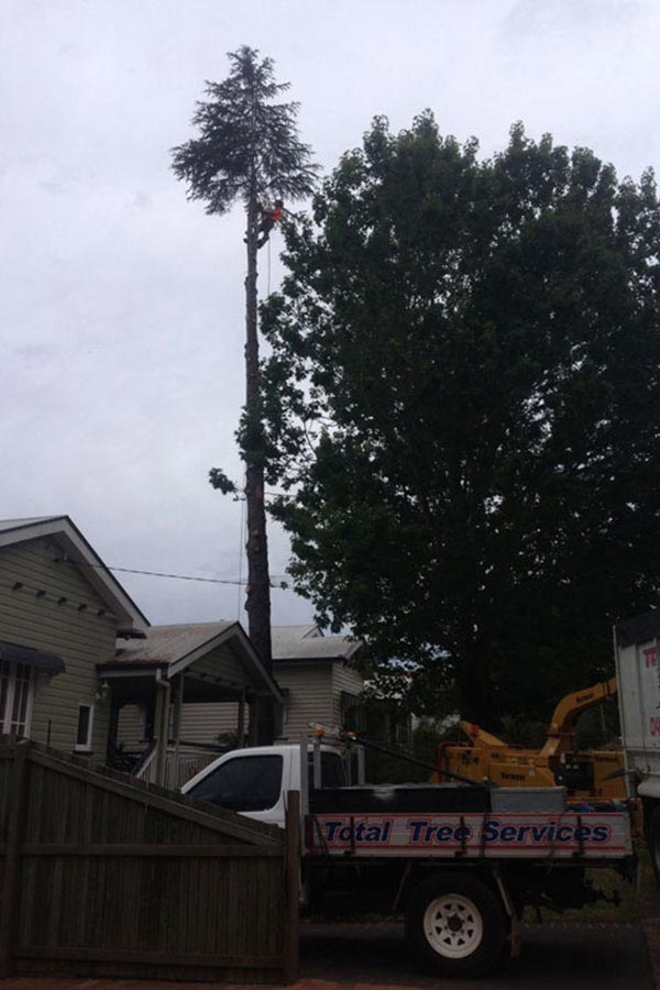 Removal of A Tall Tree at A Front of A House
