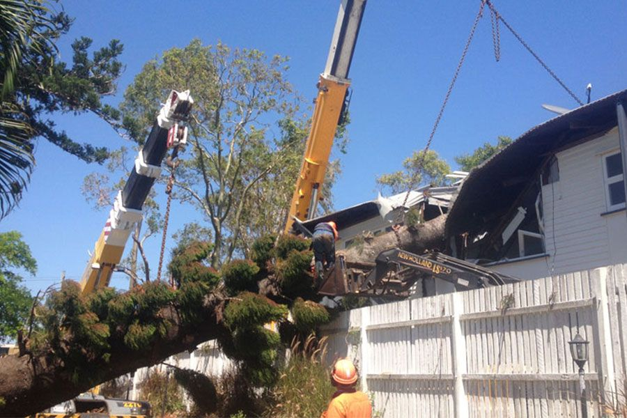 Removal of A Fallen Tree that Damaged a House Property