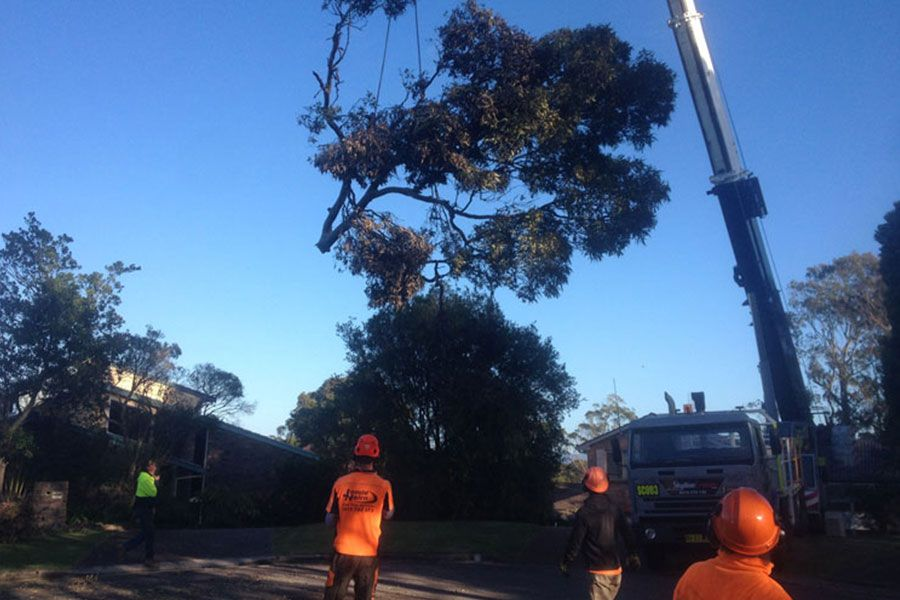 Removal of A Tree Using One of The Total Trees Services Crane