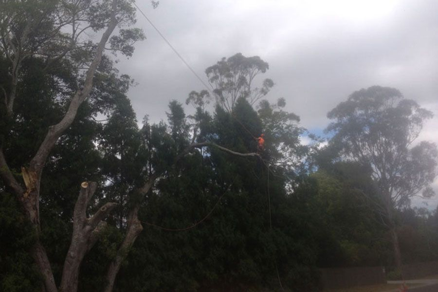 Removal of Damaged Trees by A Storm