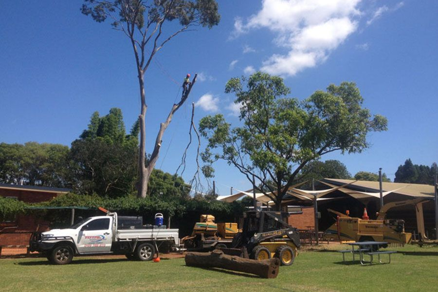 Removal of Gum Tree in School Grounds