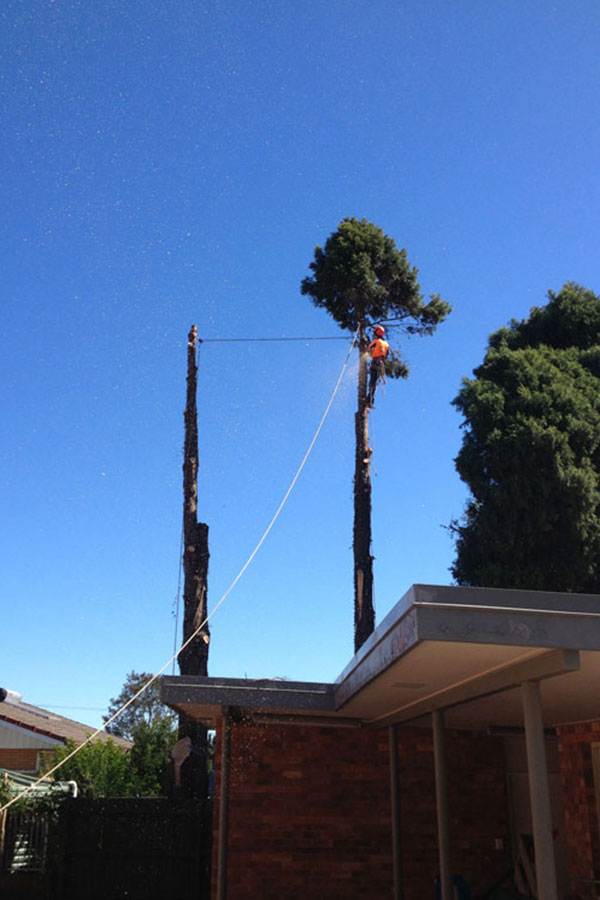 Removal of Tree in A Client's Property