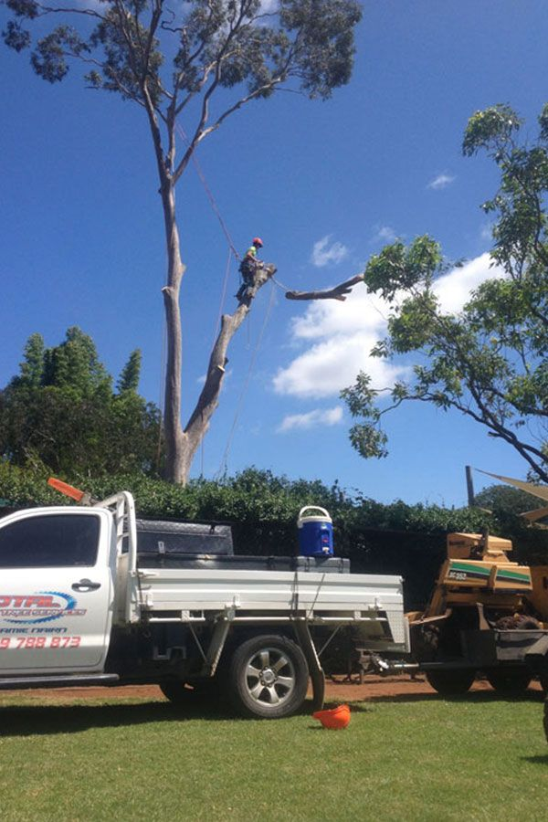 Removing Branches of A Gum Tree