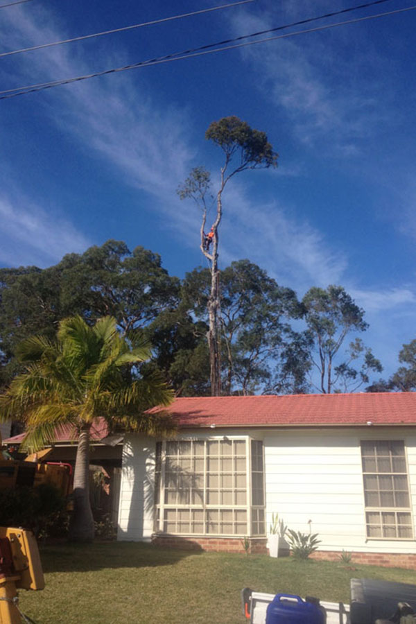 Tree Pruning in A Client's Property