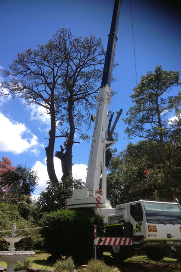 White Crane of Total Tree Services for Removal of Trees