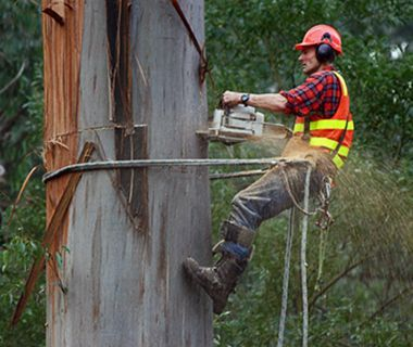 How Arborist Reports Help Council's and Property Owners