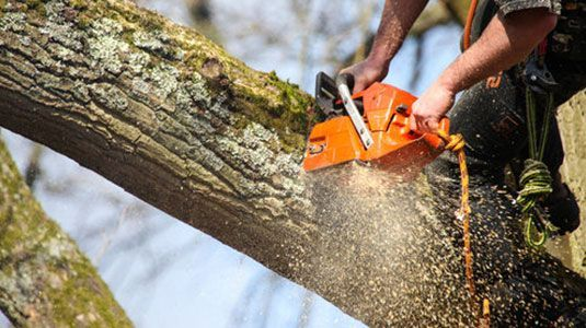 Protecting Your Tree Assets Through Surgery