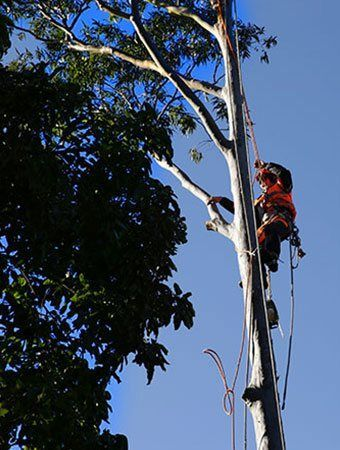 Tree Top Cutting