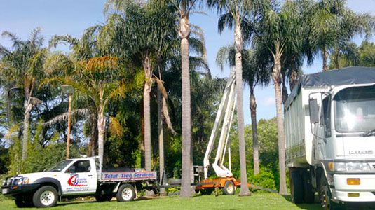 When You See The Old Ute and Ladder – Run! Getting The Right Tree Services